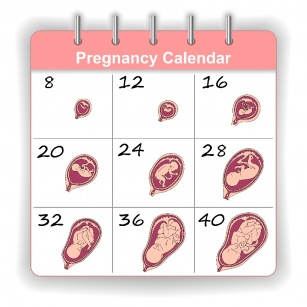 Pregnancy Week to Week